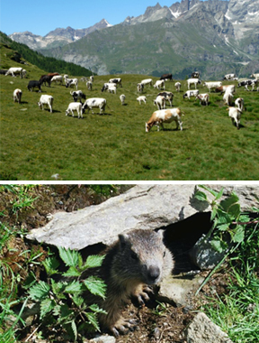 WIld animals in Cheneil, nature yoga, Yogagaia and hiking in the Alps
