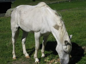 Pictures of Cheneil - Wild horse, wild animals in the mountain