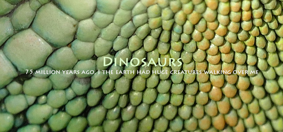 DInosaurs, Yogagaia's sessions