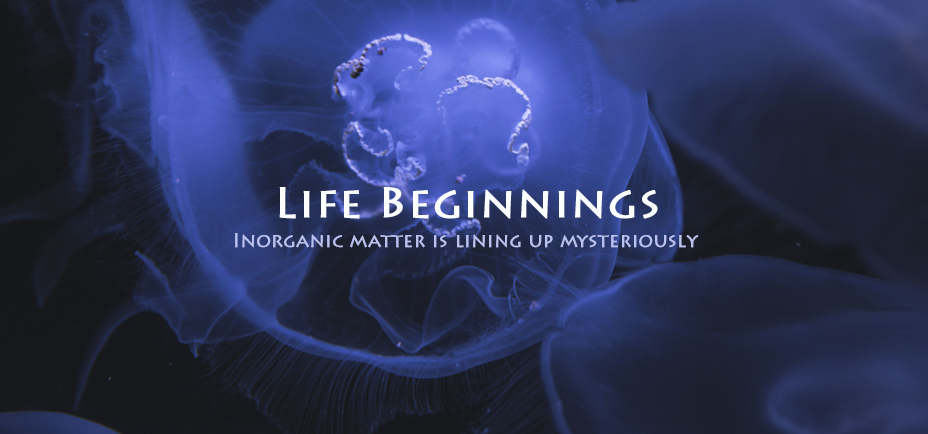 Life beginnings, Yogagaia's sessions