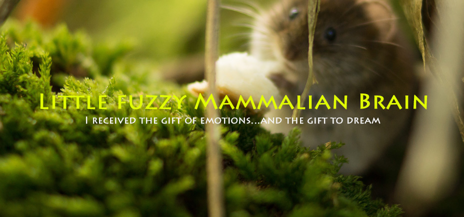 Little fuzzy mammalian brain, Yogagaia's sessions