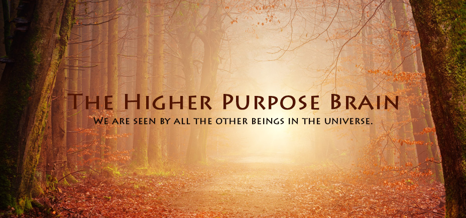The higher purpose brain, Yogagaia's sessions