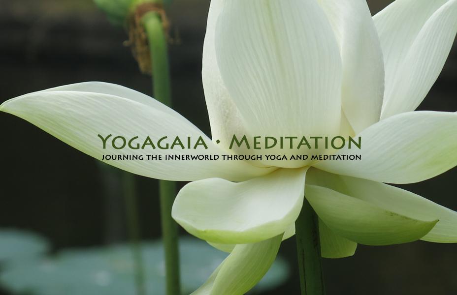 White open lotus flower meditation