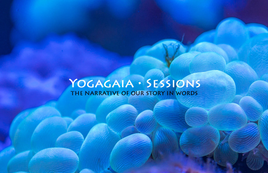 Yogagaia Session main graphic, sea eggs